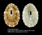 Fissurella formosa