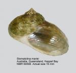 Stomatolina mariei