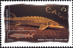 Canadian Postage Stamp (1997): Atlantic Sturgeon, Acipenser oxyrhynchus