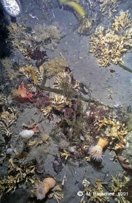 Sea-floor 95 m of depth