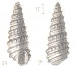 Rissoina insolita Deshayes, 1863