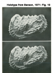 Abyssocythere atlantica Benson, 1971 Fig. 10
