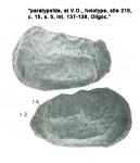 Abyssocythere diagrenora (Gernet, 1985, Pl. 4.12-14)