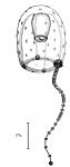 Corymorpha  verrucosa from Bouillon (1978c)