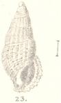 Rissoina abnormis G. Nevill & H. Nevill, 1875