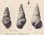 Rissoina substriata Zhizhchenko, 1936