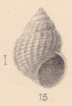 Rissoa versoverana Melvill, 1893