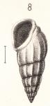 Rissoina duclosi Montrouzier in Souverbie & Montrouzier, 1866