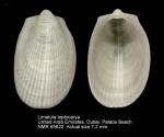 Limatula leptocarya