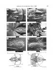 Glatzel 1988 Canuella furcigera plate 1 male
