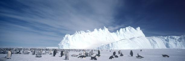Emperor Penguin crop cover