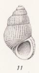 Pusillina denseclathrata (Thiele, 1925)
