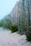 Nature & Environment