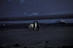 King Penguins on beach_1