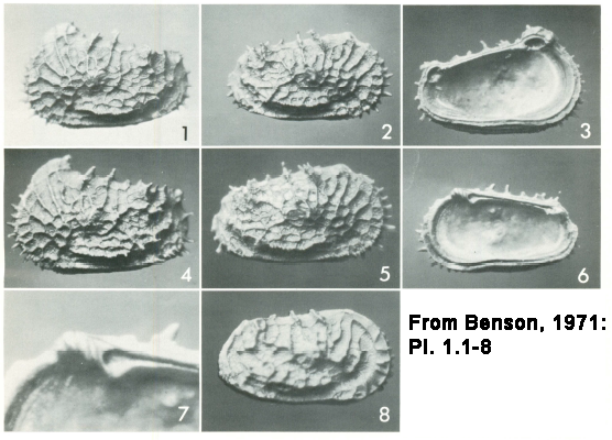 From Benson, 1971