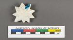 Calcarina calcar d'Orbigny, 1839