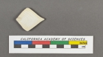 Frondicularia rhomboidalis d'Orbigny, 1826