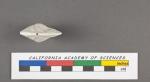 Nummulina discoidalis d'Orbigny, 1826