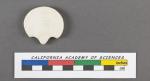 Pavonina flabelliformis d'Orbigny, 1826
