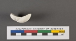 Truncatulina tuberculata d'Orbigny, 1826