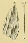 Planularia depressa d'Orbigny, 1849