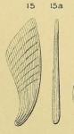 Planularia elongata d'Orbigny, 1849