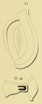 Spiroloculina limbata d'Orbigny, 1826