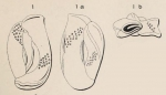 Quinqueloculina variolata d'Orbigny in Terquem, 1878