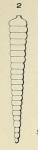 Nodosaria orthocera d'Orbigny, 1826
