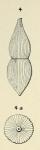 Nodosaria lamarckii d'Orbigny, 1852