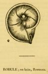 Robulus cultratus Montfort, 1808