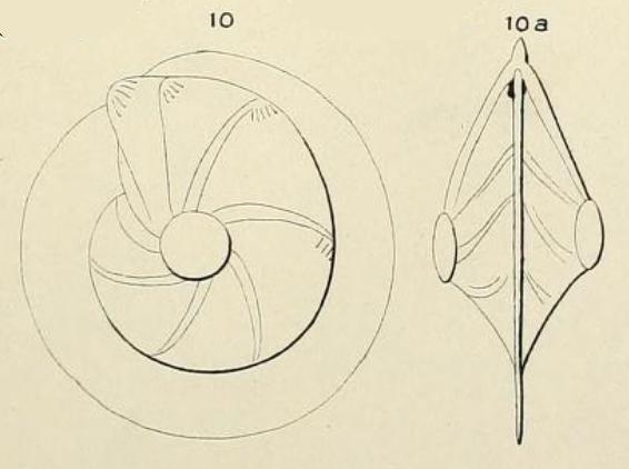Robulina cultrata (Montfort, 1808)