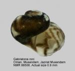 Gabrielona roni
