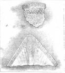 Lagena formosa Schwager, 1866