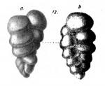 Gaudryina baccata Schwager, 1866