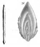 Frondicularia foliacea Schwager, 1866