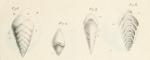Textularia aciculata d'Orbigny, 1826