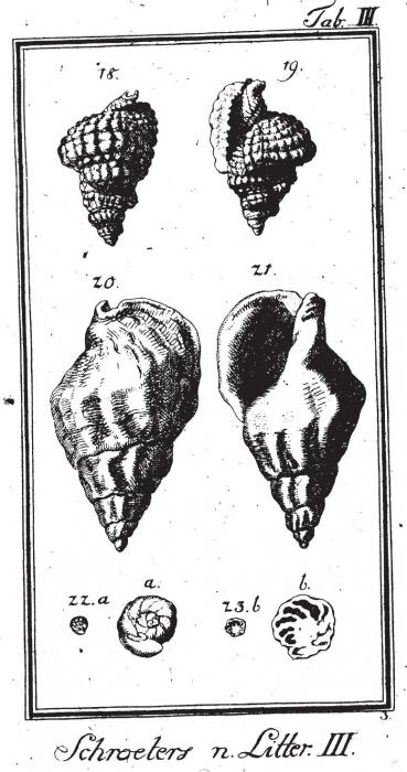 Serpula nautiloides Plate 3, fig. 22-23 in Schröter, 1786