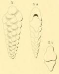 Textularia lobata d'Orbigny, 1852
