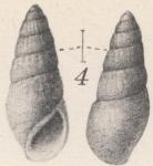 Moerchiella manzakiana (Yokoyama, 1922)