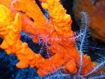 Sea lily above sponge