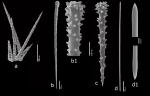 Hymedesmia (Stylopus) alcoladoi Van Soest, 2017