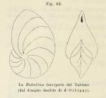 Robulina laevigata d'Orbigny in Fornasini, 1902