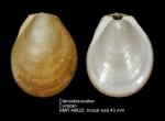 Ctenoides scaber