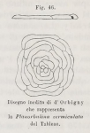 Planorbulina vermiculata d'Orbigny, 1826