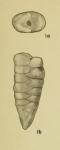 Gaudryina koimetercola Hadley, 1935