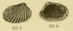 Cardita plata Ihering, 1907