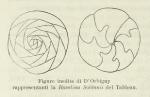 Adelosina soldanii d'Orbigny, 1826