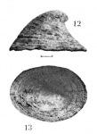 Pripilidium crossei Dautzenberg & Fischer, 1896 Original figure (pl. 22 fig. 12-13)