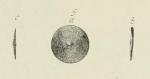 Orbitolites socialis Leymerie, 1851